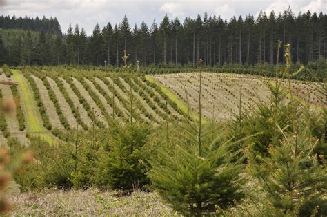 tree farms in oregon and washington state trekaroo