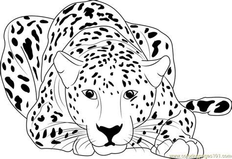 Cheetah Kleurplaat by 20 Free Printable Cheetah Coloring Pages