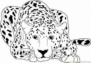20  Free Printable Cheetah Coloring Pages