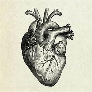 Anatomical Human Heart Tattoo Design
