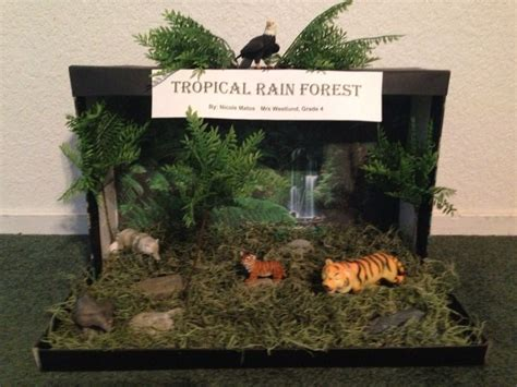 Temperate Deciduous Forest  Son's 5th Grade Ecosystem