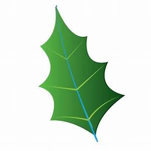How To Draw Mistletoe - Cliparts.co