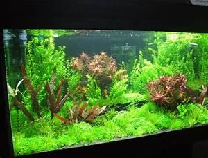 Aquarium Einrichten Beispiele : aquarium einrichten aquarium knowhow ~ Frokenaadalensverden.com Haus und Dekorationen