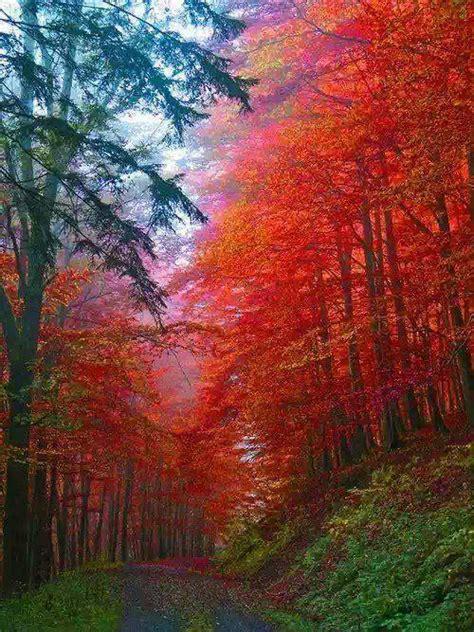 fascinating   places   amazing autumn