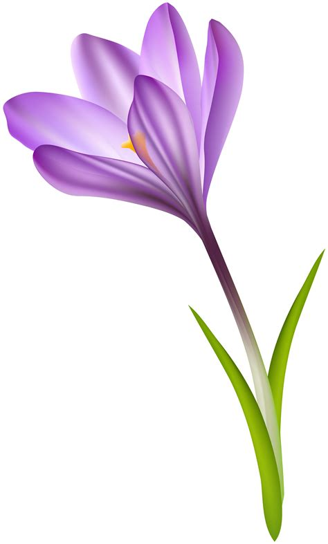 clipart crocus 10 free Cliparts | Download images on ...