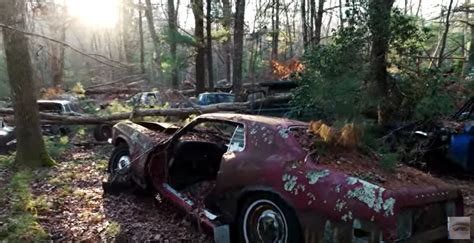 unique abandoned car forest  vehicles   die