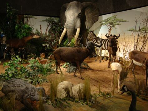 chambres d hotes geneve museum of history museum d 39 histoire naturelle