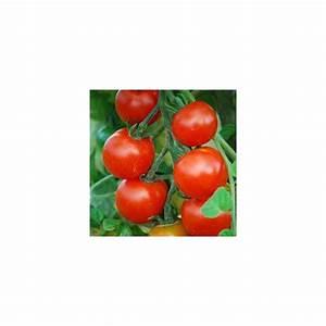 Planter Des Graines De Tomates : quand planter des tomates cerises photo comme pour le ~ Dailycaller-alerts.com Idées de Décoration