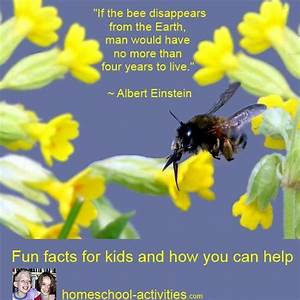 Fun Bee Facts And How Kids Can Help