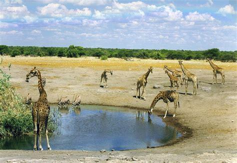 hermoso video de drone en la sabana sudafricana muy interesante