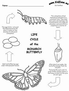 Butterfly Life Cycle Worksheet