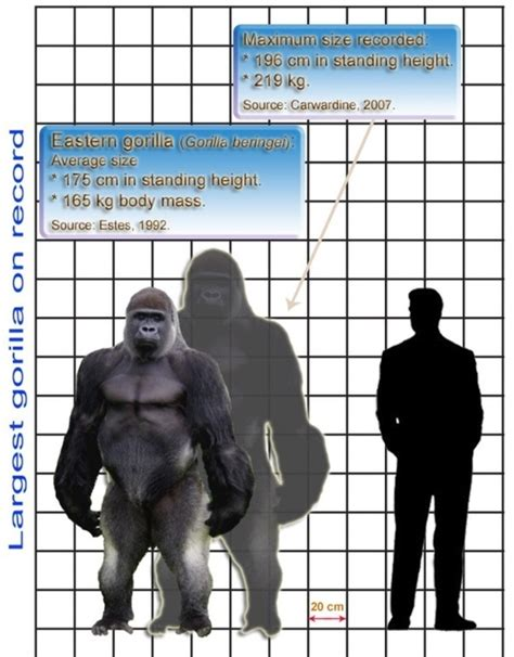 Grizzly Bear Size Compared to Human