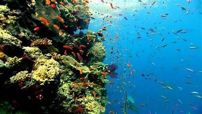 Fish Aquarium Wallpapers Desktop Colorful Wide 3d