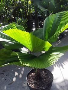 Miami, Tropical, Plants