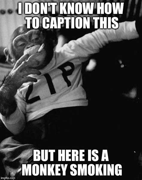 Caption Meme Maker - smoking monkey imgflip