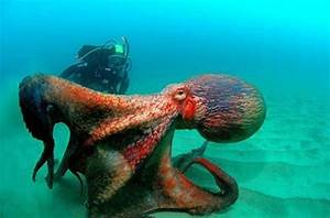 Ocean Critters That Will Scare You More than Sharks ...
