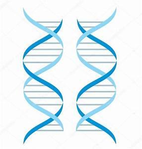 DNA structure — Stock Vector © natalia2484 #5401204