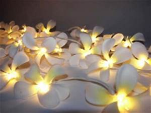 White Frangipani Style - fairy light-Great for decorating