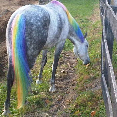 horse dye tails tail horses animals safe hair mane dyed manes body coloring pet pony fur dogs dyes long mares
