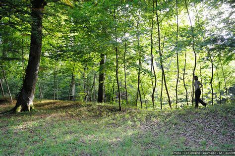 chambre hote montauban montauban entre l la nature et l histoire