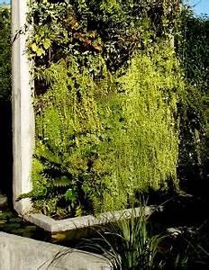 Mur Vegetal Exterieur : fabriquer un mur vegetal exterieur digpres ~ Melissatoandfro.com Idées de Décoration