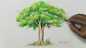 Tree - Drawing A Tree With Simple Colored Pencils | - YouTube