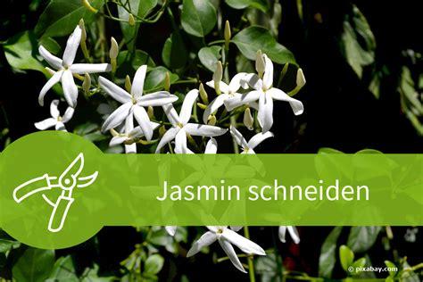 jasmin schneiden regelwerk fuer den echten falschen