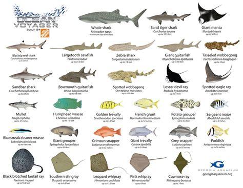 images  sharks  pinterest utila great