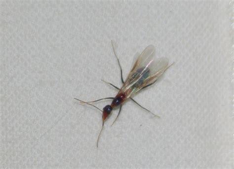 flying ant flying ant 198 rchies archive digital detritus