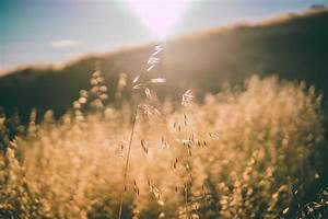 Nature, Landscape, Field, Sun, Rays, Sky, Hd, Wallpapers, Desktop, And, Mobile, Images, U0026, Photos