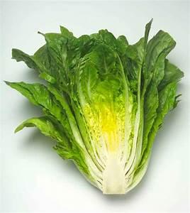 Romaine Lettuce, Cos Lettuce, Lettuce - Our Plants - Kaw ...