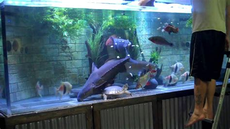monster aquarium  feeding youtube