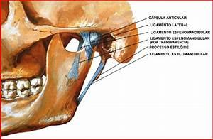 Ligaments Of The Temporomandibular Joint  Source  Netter