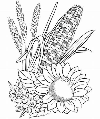 Coloring Pages Crayola Plants Corn Flowers Thanksgiving