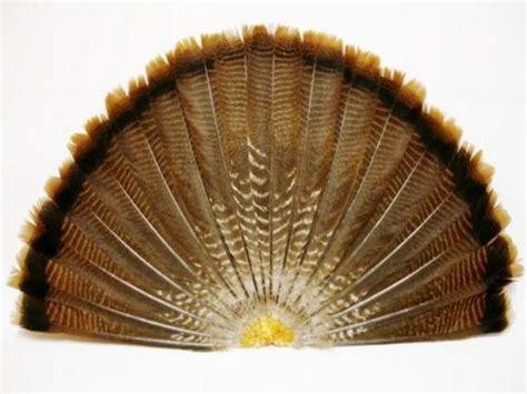 turkey feather template set of 6 wild turkey feathers ebay