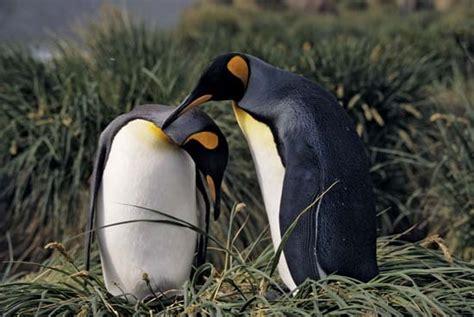 courtship behaviour britannica com