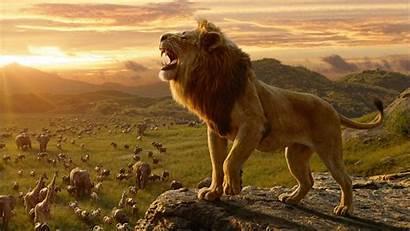 4k Lion King Simba Wallpapers Resolutions Ultra