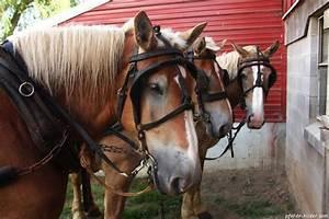 Bilder Von Pferden : bilder von braunen pferden 9 pferdebilder galerie im galopp ~ Frokenaadalensverden.com Haus und Dekorationen