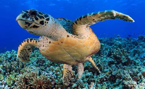 Marine Animal Wallpaper - sea wallpapers animal hq sea pictures 4k