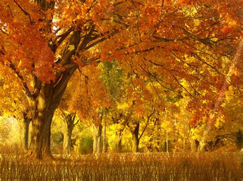 Autumn Animated Wallpaper - autumn xp background autumn weddings pics