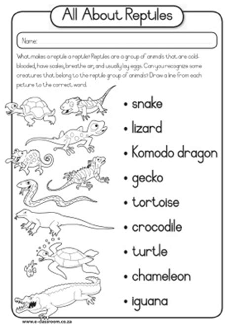 10 best images of hibians vs reptiles worksheet