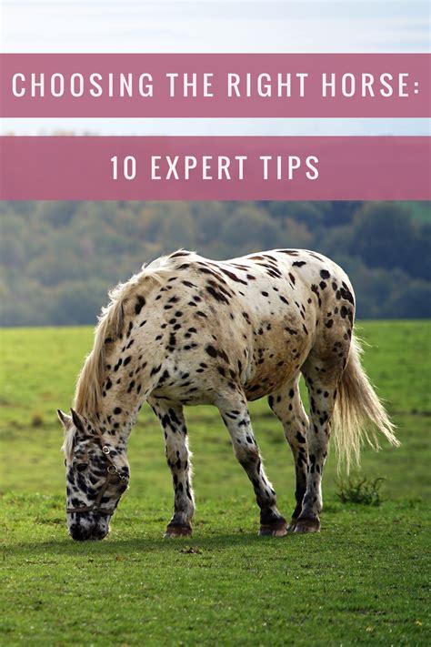 horse expert horses choosing right training amazinganimals xyz breeze these riding