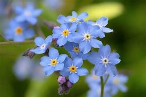 Bodendecker Blaue Blüten : 20 winterharte stauden f r sonne halbschatten und schatten ~ Frokenaadalensverden.com Haus und Dekorationen