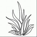 Plants Coloring Pages Drawing Seaweed Plant Underwater Grass Sea Ocean Clipart Shrubs Colouring Printable Kelp Draw Bushes Aquatic Outlines Getdrawings sketch template