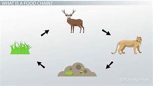 Food Chain Lesson For Kids  Definition  U0026 Examples
