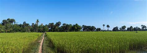 Rice fields cambodia free image