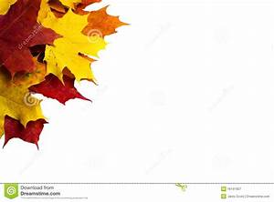 Autumn Leaves Royalty Free Stock Photography - Image: 16141907