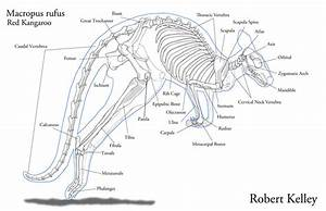 Anatomy - Reproduction