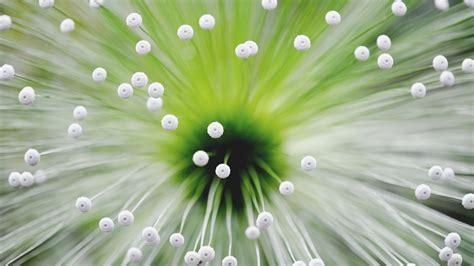 flower tendrils plant macro hd wallpaper