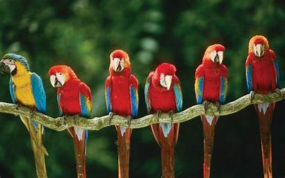 Birds Trees Tree Bird Macaws Wallpapersafari Desktop